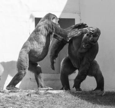 Elephant Mammal Sculpture #161970
