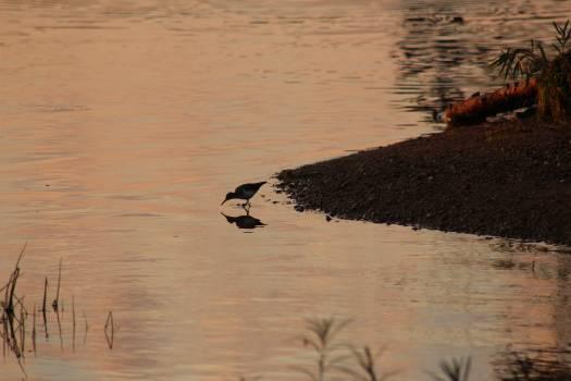 Water Lake Crocodile Free Photo