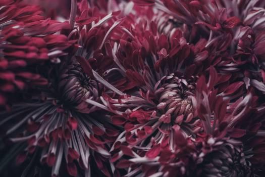 Sea urchin Invertebrate Sea anemone Free Photo