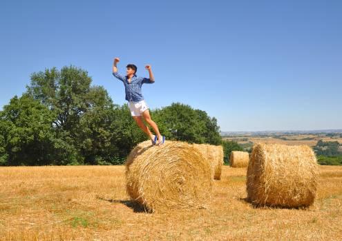 Feed Hay Fodder Free Photo