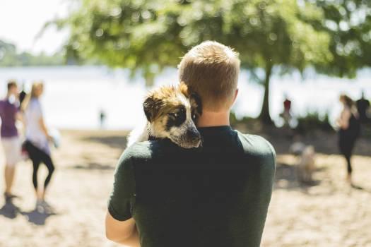 Dog Canine Darling Free Photo