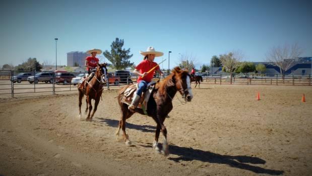 Resort Racing Horse Free Photo