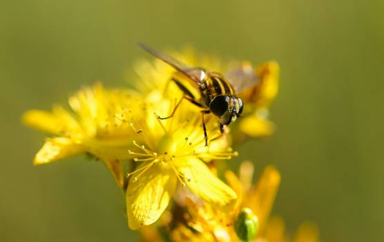 Insect Fly Arthropod #163287