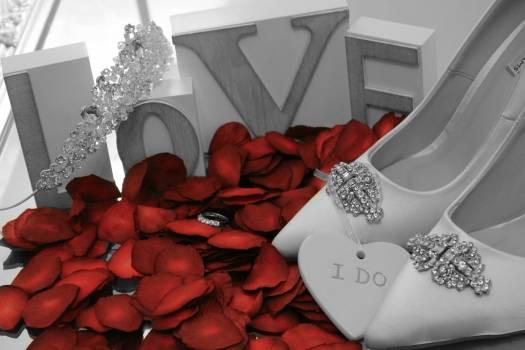 Petal Rose Valentine Free Photo