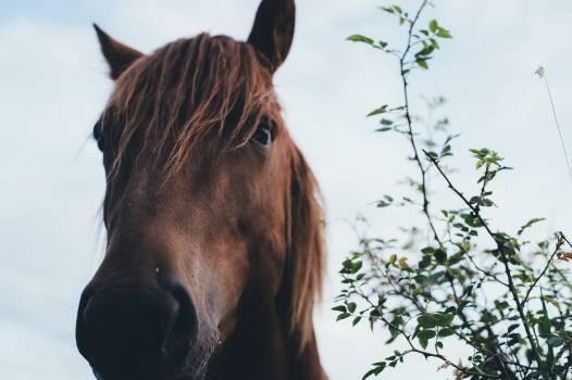 Horse Thoroughbred Animal #163578