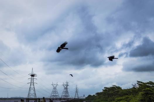 Sky Aircraft Flying Free Photo
