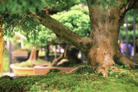 Tree Oak Landscape Free Photo