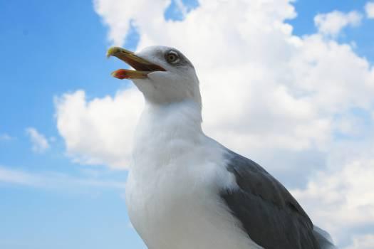 Albatross Seabird Aquatic bird #16416