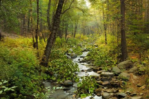 Waterfall Landscape River #164294
