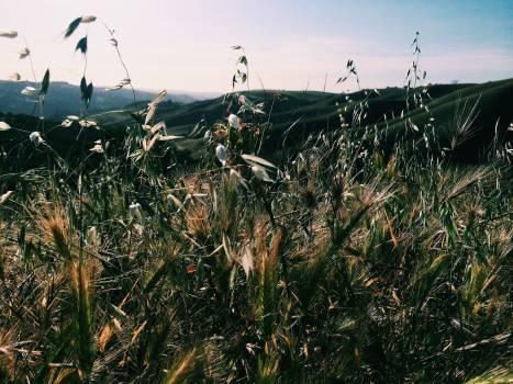 Grass Sky Landscape #16437