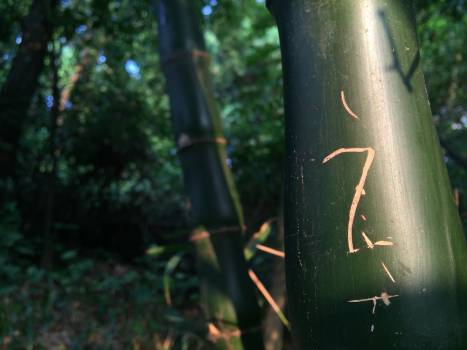 Bamboo Plant Leaf Free Photo