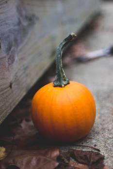 Pumpkin Vegetable Tomato #16447
