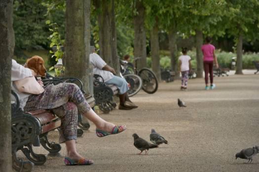 Turkey Bird Hunter Free Photo