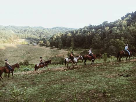 Cowboy Resort Horse Free Photo