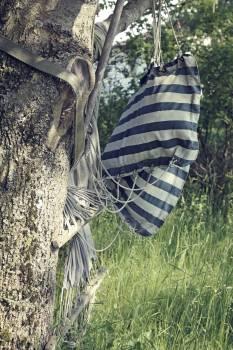 Tree Zebra Wildlife Free Photo