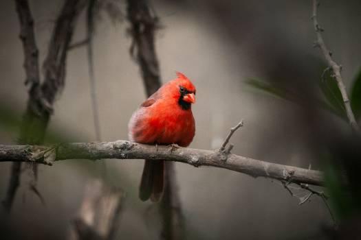 House finch Finch Bird #166058