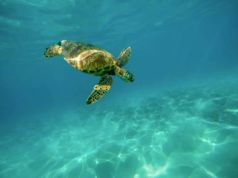 Loggerhead Sea turtle Turtle #166273