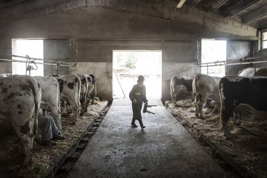 Dairy Horse Farm Free Photo