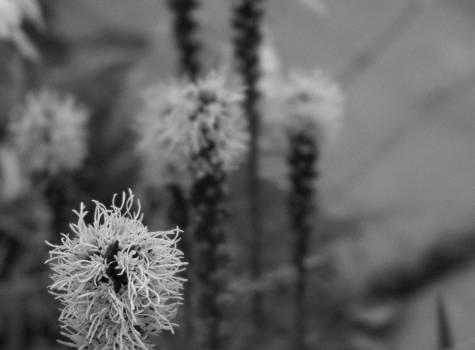 Leaf Plant Plant part Free Photo