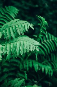Fern Plant Leaf #166996