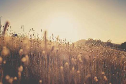 plants field sun rays  #16755