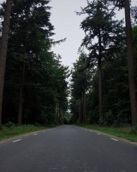 Trampoline Tree Forest #167612