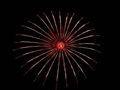 Firework Explosive Night Free Photo