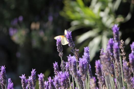 Purple Flower Garden Free Photo