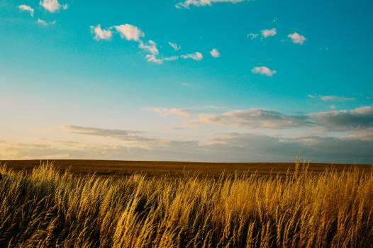 landscape field blue  #16823