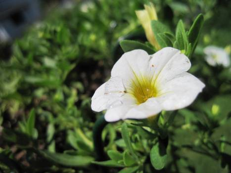 Herb Plant Vascular plant Free Photo