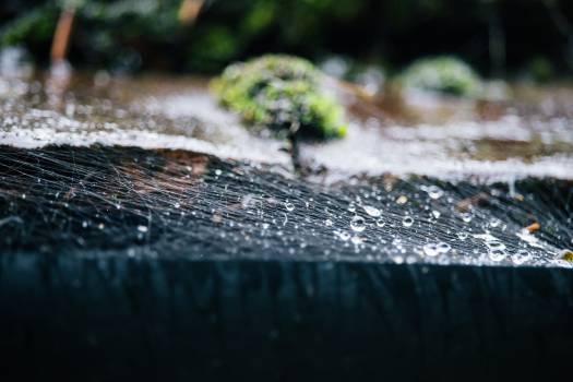 Crocodilian reptile American alligator Alligator Free Photo