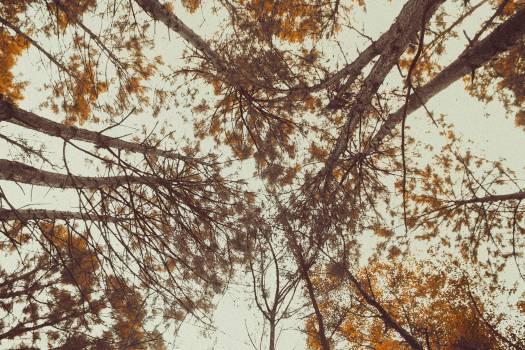 Tree Branch Oak Free Photo