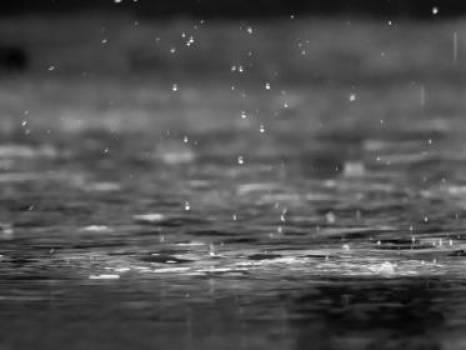 raining rain drops water  Free Photo