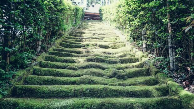 Maze Landscape Agriculture #168810