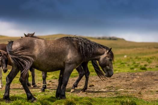 Horse Warthog Mammal Free Photo