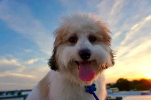 Dog Canine Domestic animal #169091