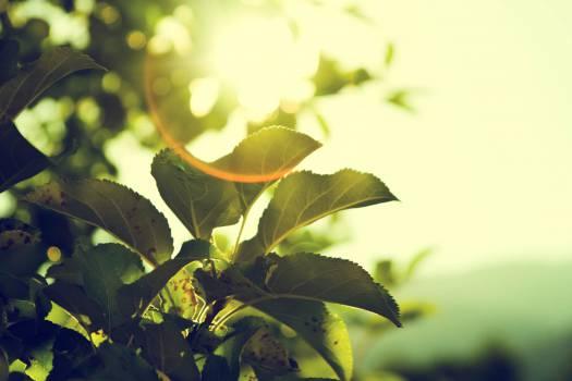 sun rays sunshine sunset  #16916