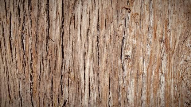 Pine Wood Texture Free Photo