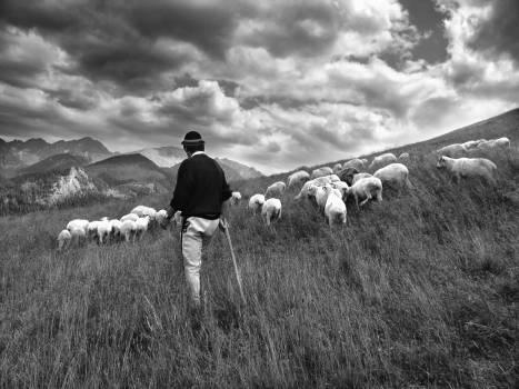 Hay Fodder Feed #169474
