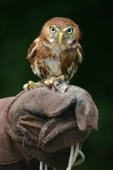 Bird Hunter Predator Free Photo