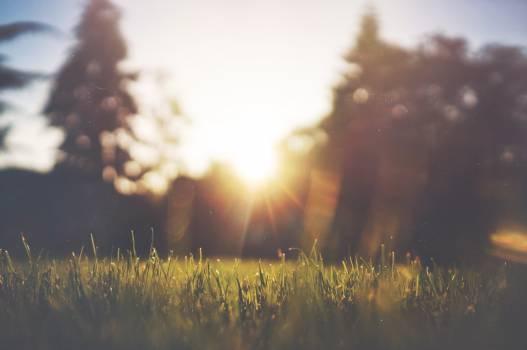 sunshine sunrays grass  #16959
