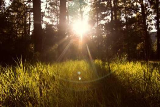 sun rays grass nature  #16979