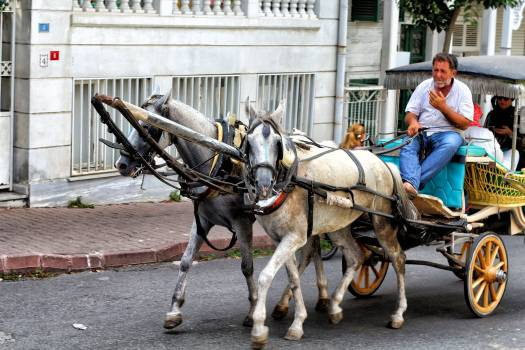 Horse cart Cart Wagon Free Photo