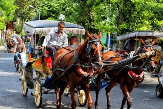 Horse cart Carriage Cart Free Photo