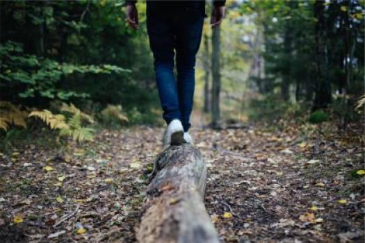 wood log walking  #17030