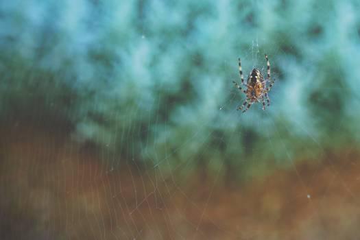Spider web Web Spider #170523