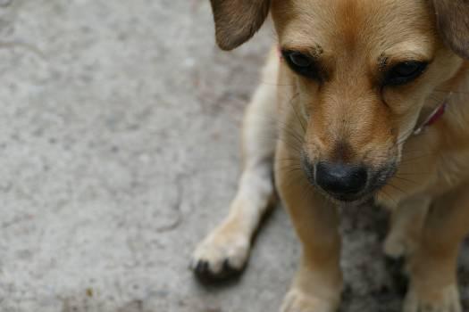 Puppy Dog Canine Free Photo