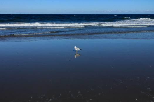 Ocean Sea Beach #170593