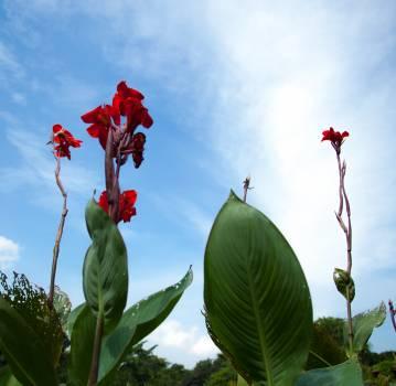 Flower Leaf Plant Free Photo