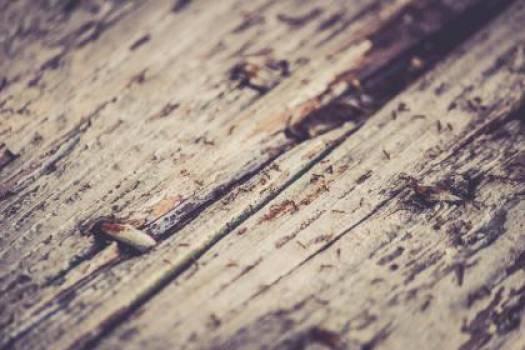 rustic wood texture  #17108